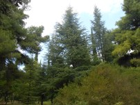 Βοτανικός Κήπος