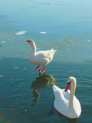 Λίμνη Ορεστιάδα της Καστοριάς