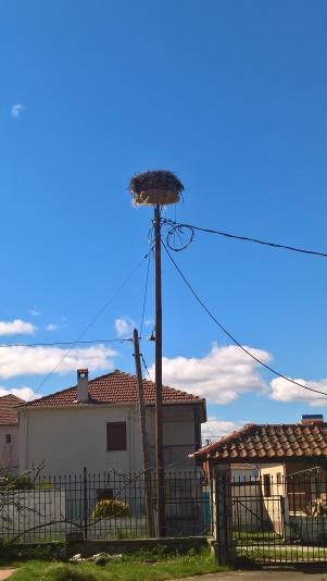 Η ψυλότερη φωλιά πελαργού στην Ευρώπη στο Πλατύ Πρεσπών