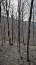 Δάσος της Χαϊντούς