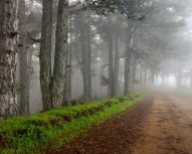 Δάσος Βελίνας