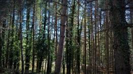 Προς το δάσος της Ελατιάς