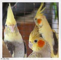 Παπαγάλοι στο Σπήλαιο Έβρου