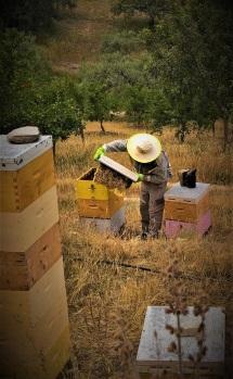 """Η κυψέλη που """"έχτισαν"""" οι μέλισσες"""