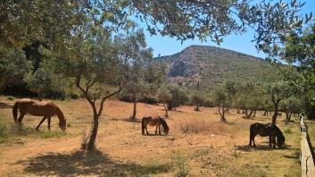 Τα άλογα Farma Moo