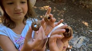Καρύδια από τρυποκάρυδους