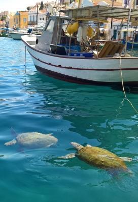 Θαλάσσιες χελώνες στο Καστελόριζο
